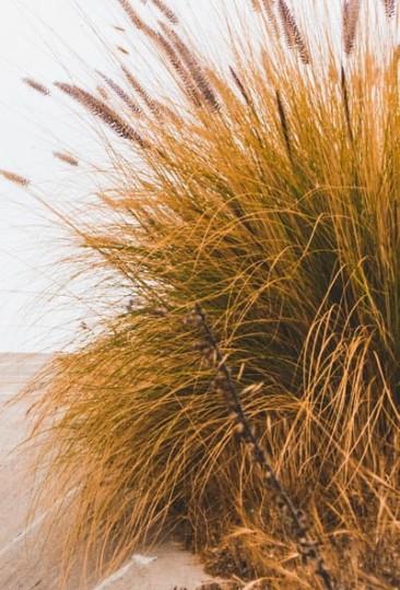 Dune grasses (1 of 1)
